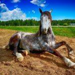 Zwei Pferde suchen!